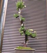 愛知県岡崎市広瀬様の使用例