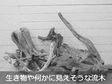生き物や何かに見えそうな流木素材