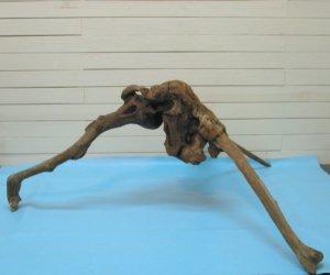 画像2: 大型変形流木根