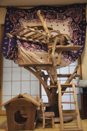 画像2: 神奈川県横浜市 N様の  流木キャットタワーの   ご利用状況