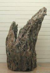 大型変形幹流木